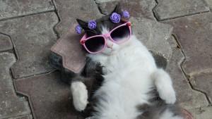 kitten-468203_1280